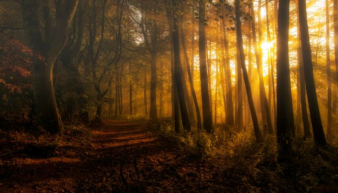 Golden Forest by cpdoogan - Fall 2016 Photo Contest