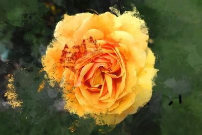 Mellow Yellow…. ヅ