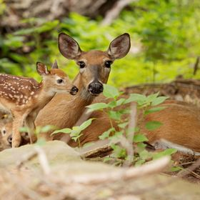 Blessed to have seen these 2 fawns shortly after their birth.