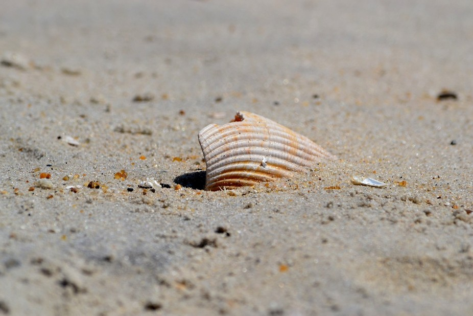 Just a shell in the sand! A shot from a family trip to Rodanthe, North Carolina.