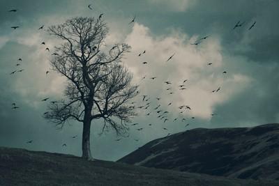 The Flocking Tree