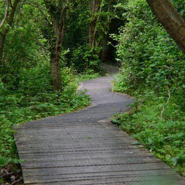 Boardwalk through the wood.