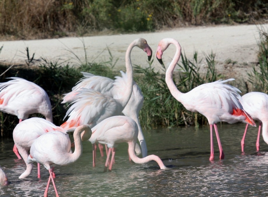 I adore these pink birds and love the Camargue where this and my other shots were taken