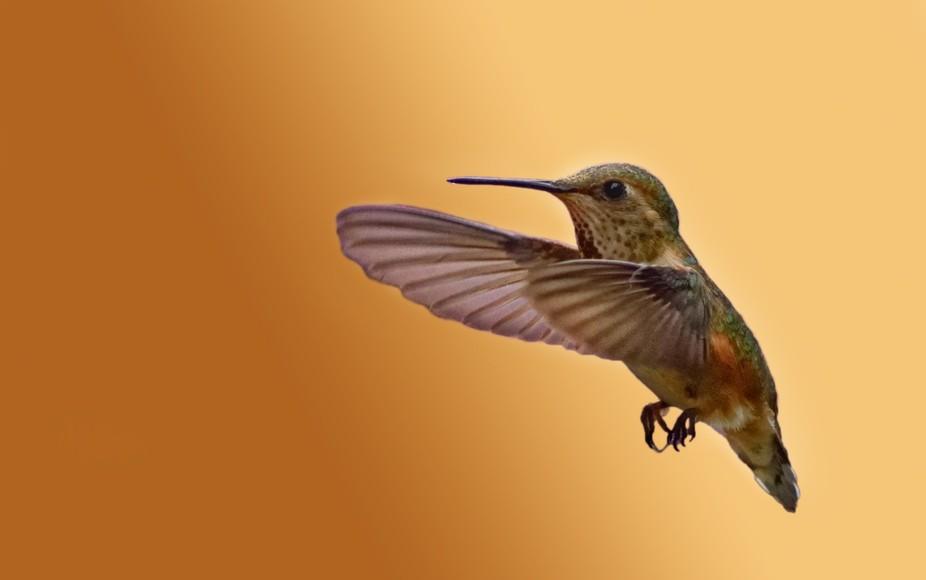 Hummingbird, don't fly away ...
