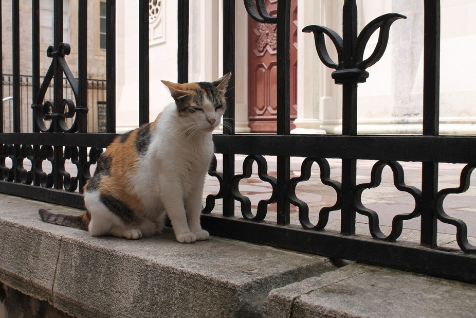 Walking down the streets od Dubrovnik I saw a kitty who was sitting near a church; I thought she ...