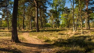 Panorama - Trees