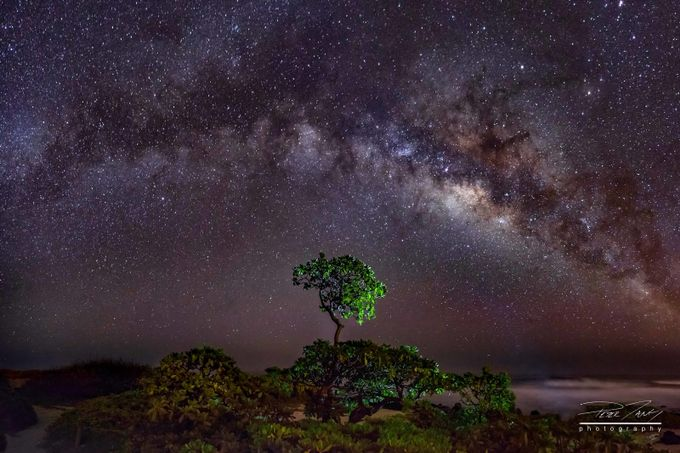 Tree of Life by petertang - Capture The Milky Way Photo Contest