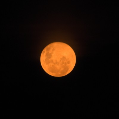 Orange moon 22-5-2016 backyard