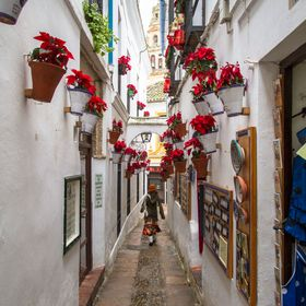a famous little street in Cordoba, Spain