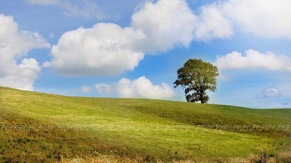 DREAMY TREE
