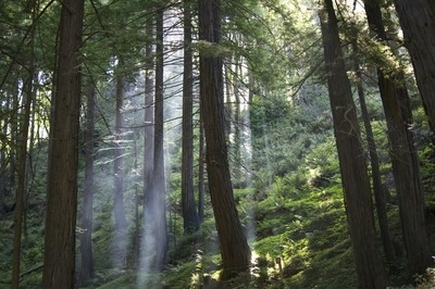 Lime Kiln State Park - Big Sur California