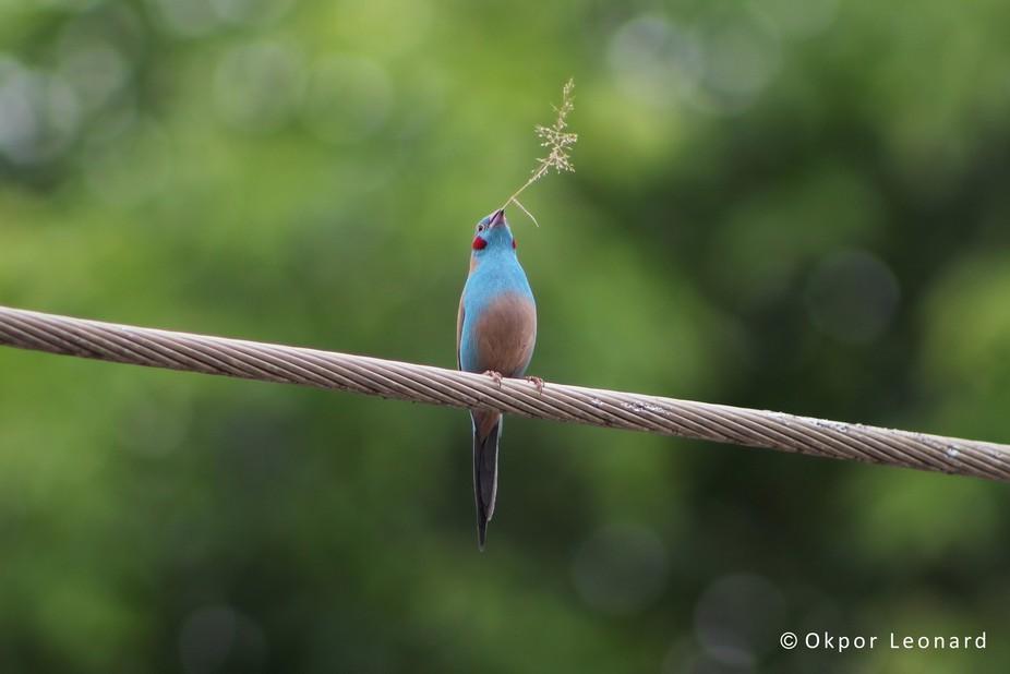 a lovely small bird