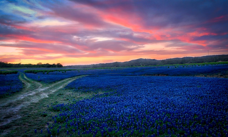 Found this place in Central Texas in the hill country where miles of Texas Bluebonnets would bloo...