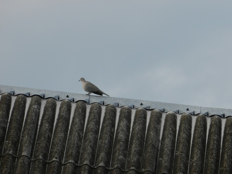 Little guest on the roof of the barn