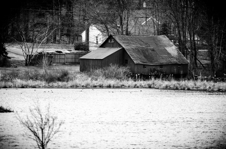 A barn succumbing to time at the edge of the beaver pond.