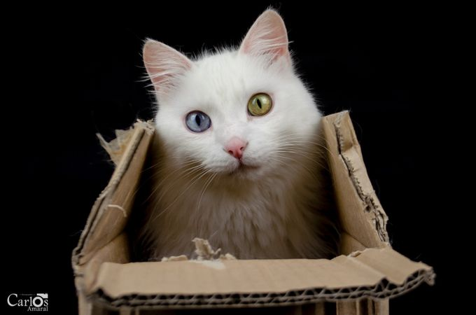Out of(in) the box... by carlosamaral - Cute Kittens Photo Contest