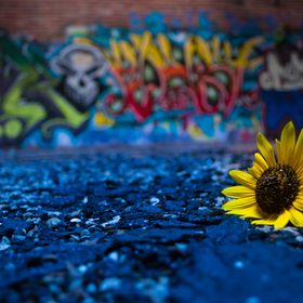 A sunflower inside the remains of a meat packing facility.