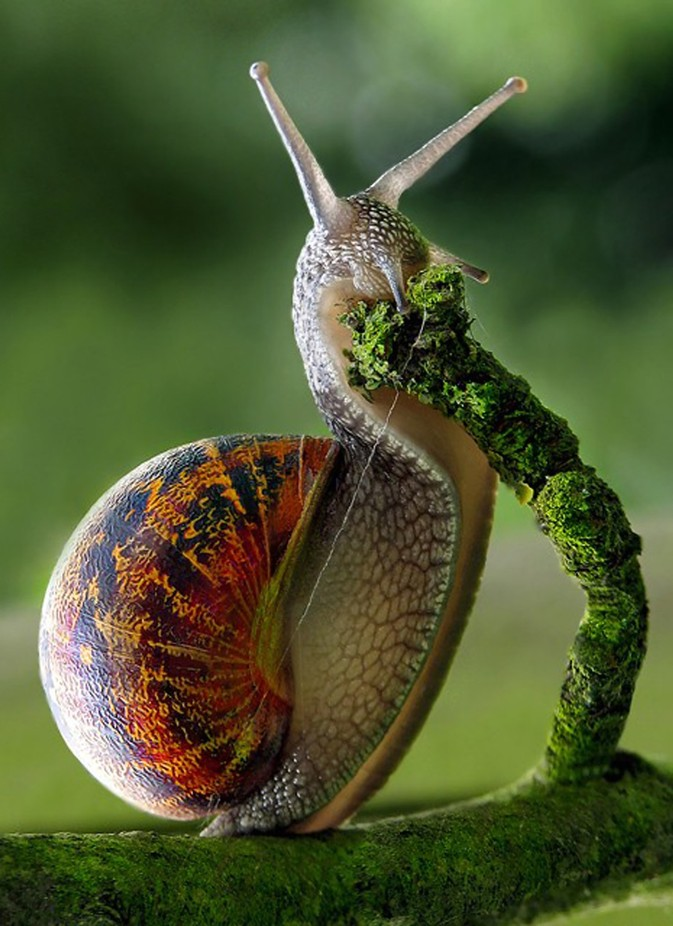 Munching Snail by David_Blakley_Photography - Small Things In Nature Photo Contest