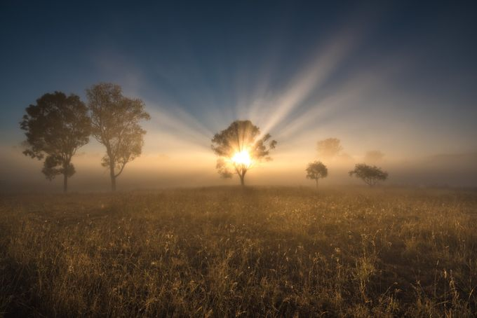 !!! Rays of Ripley !!! by bobbyd-skidmore - Silhouettes Of Trees Photo Contest