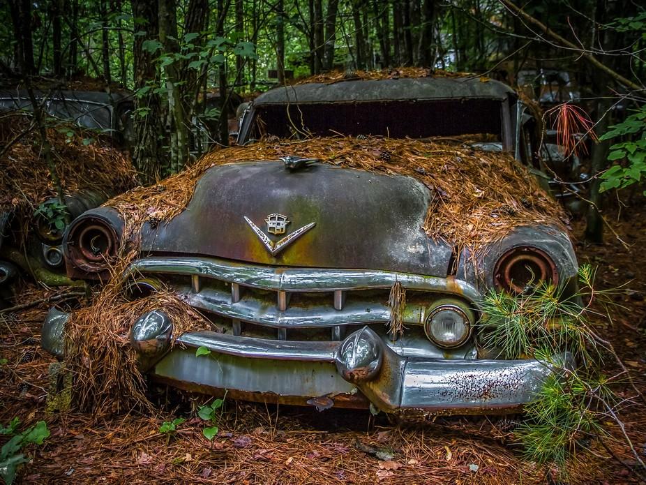 An image from Old Car City near Atlanta GA.