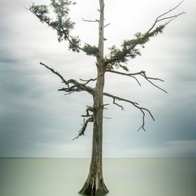 Solitary tree in the waters of Currituck Sound... Shooting a long exposure made the choppy waves look like glass.