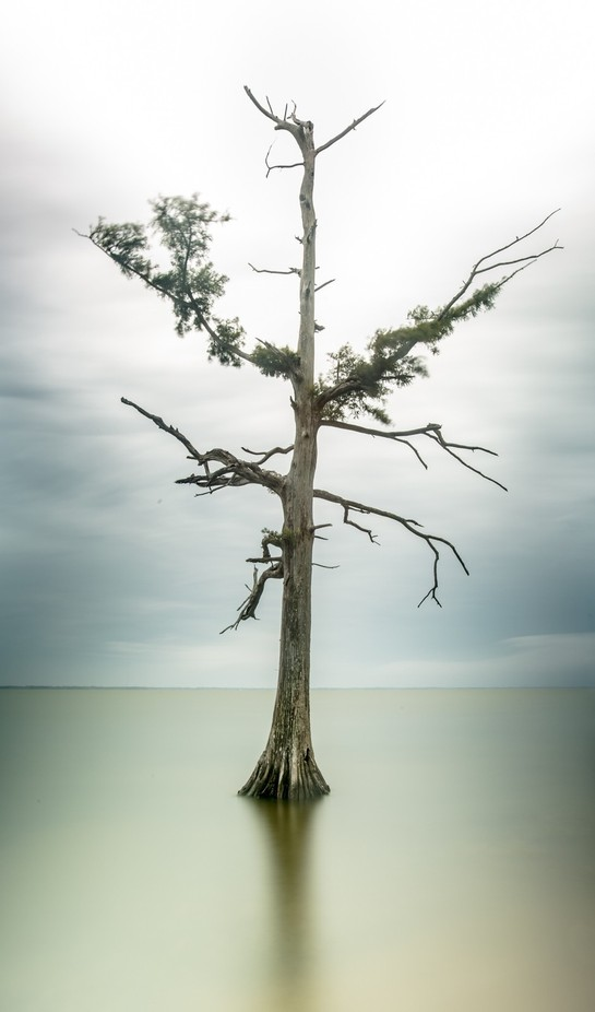Tree in Currituck Sound by halcook - Long Exposure In Nature Photo Contest