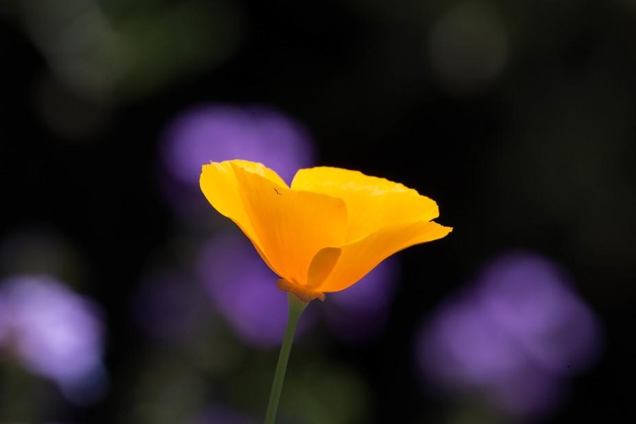 peaceful spring.jpg