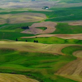 This image was taken near the top of Steptoe Butte, a beautiful vantage point in the Washington Palouse. An area famous for wheat fields and roll...