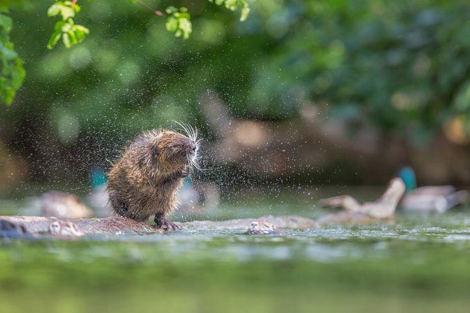 ~ Shaking ~ by HenrikSpranz - Animals And Water Photo Contest