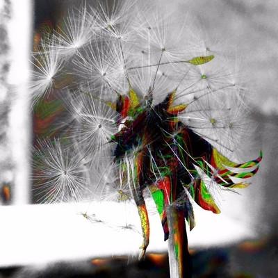 Dandelion Trip