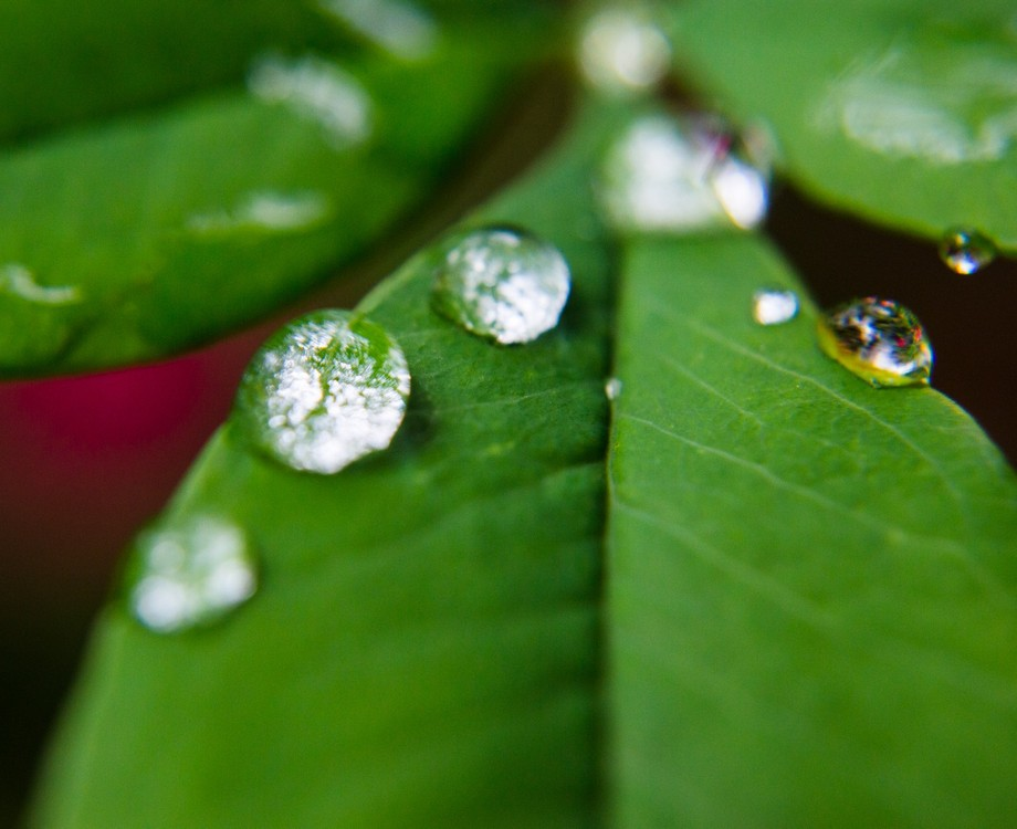 Rain drops with reflections on leaf
