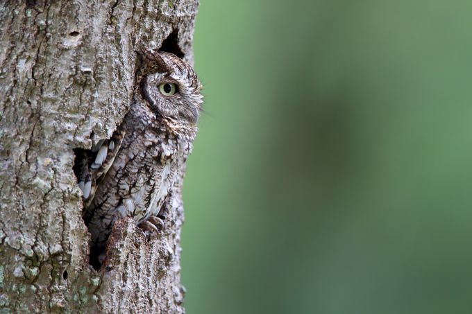 Nothing To See Here by meganlorenz - Can You See Me Photo Contest