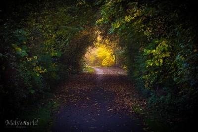 Follow the light...