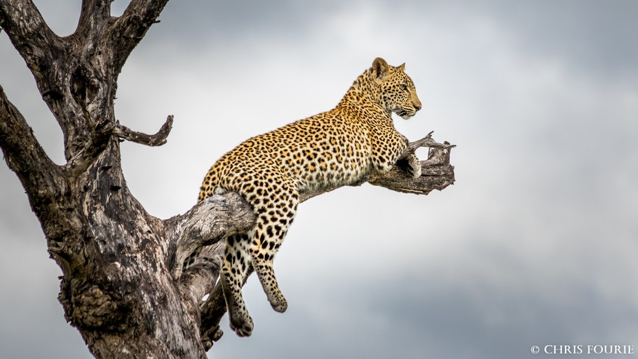 Photo taken at Sabi Sands Private Game Reserve Canon EOS 7D Mark II 1/400 sec at ƒ/7.1 ISO 200 3...