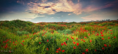 Poppy's meadow