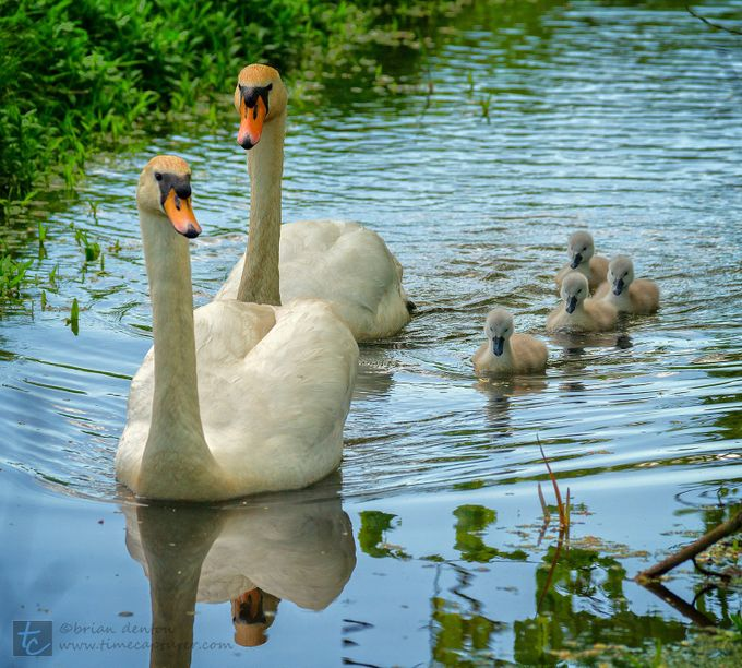 Family Group By Timecapturer