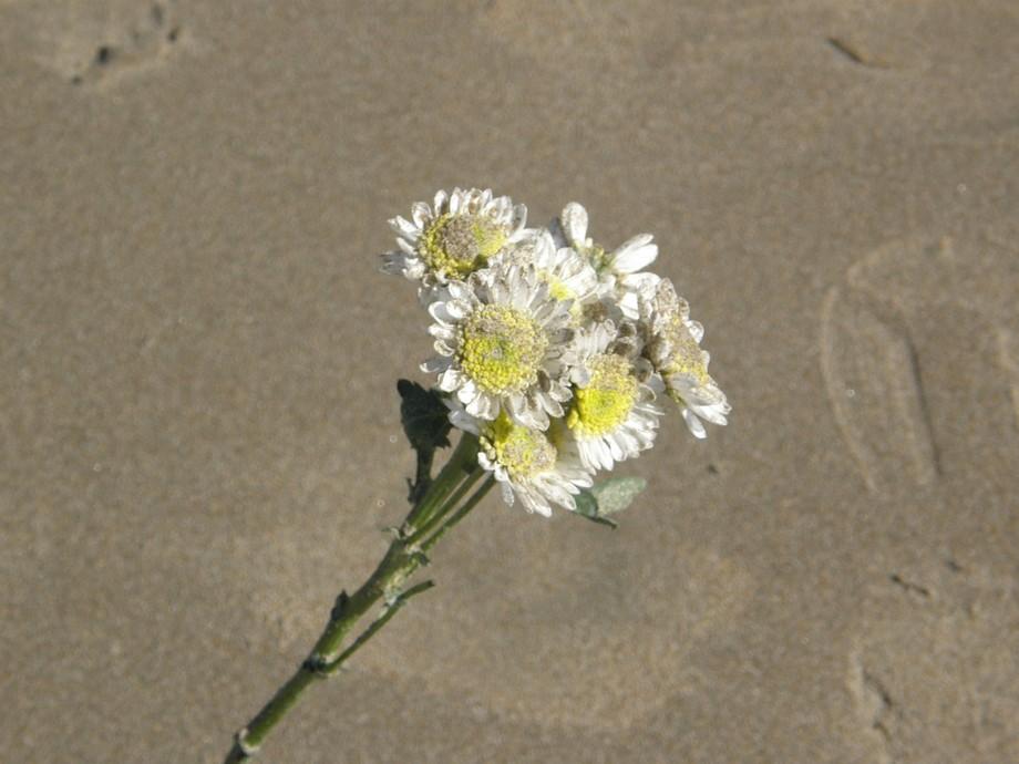 A flower I found on the beach.