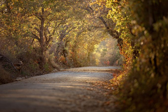 Texas Country Road by lisablevins - Country Roads Photo Contest