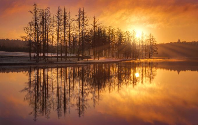 Golden morning by fuzzyfelt30 - Silhouettes Of Trees Photo Contest