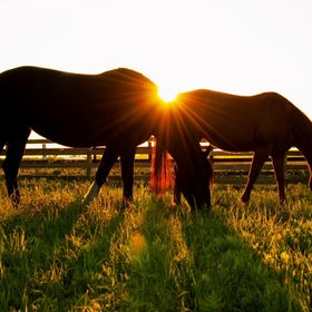 Golden Hour Pasture