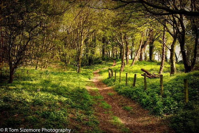 A beautifully wooded path along the coast to Bamburg Castle.