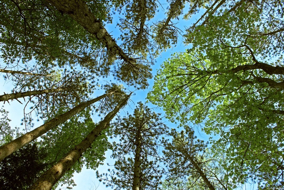 On the forest floor, a bugs viewpoint of the sky above it.  The colors of the new leaves and the ...