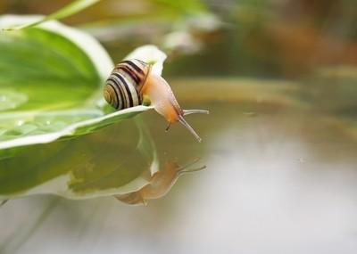 Snail reflections