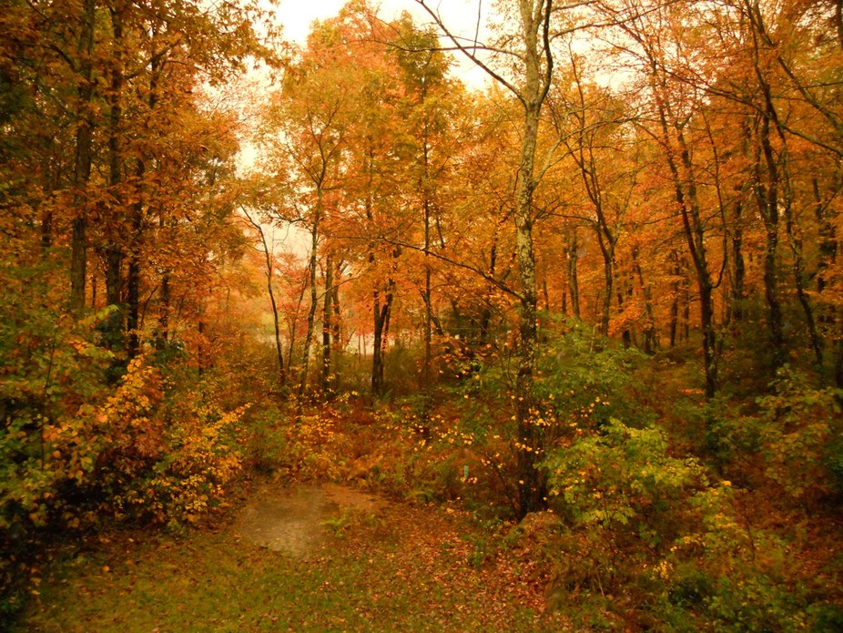 October 4th, 2012, rained all day and now late afternoon. The eerie golden glow and quiet after t...