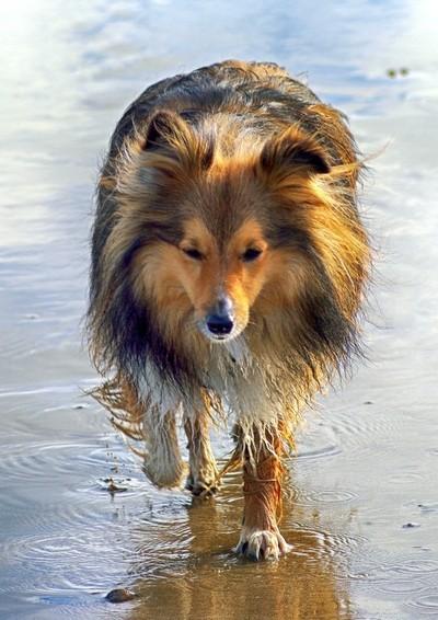 Benjie on the Beach