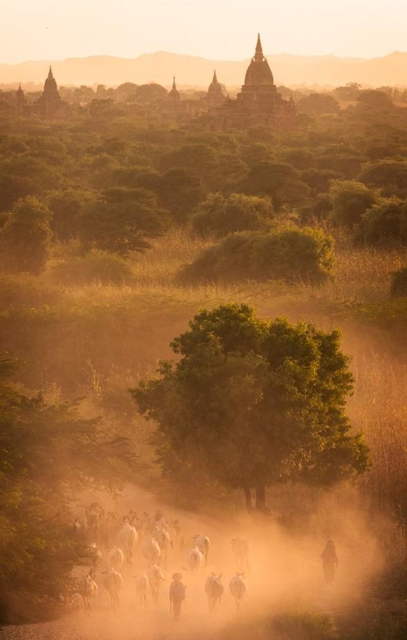 Farmers of Bagan by robgubiani - Dusty Photo Contest