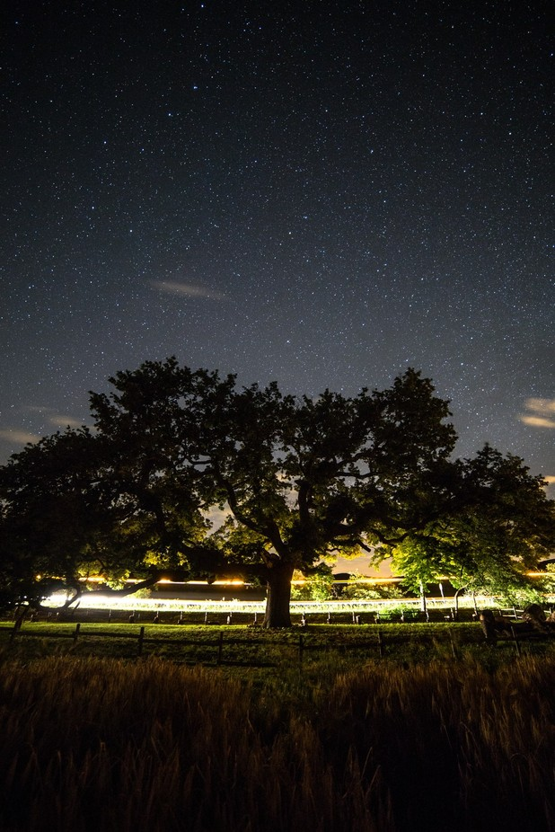 The Big Oak by eneabarbieri - Silhouettes Of Trees Photo Contest