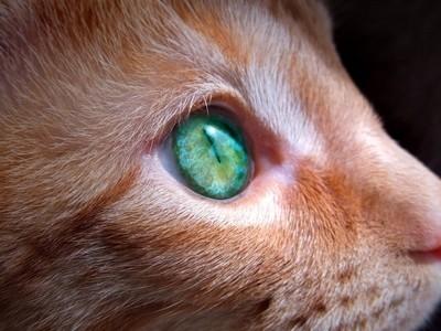 The world in Stewie's eyes