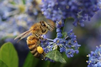 Full of pollen