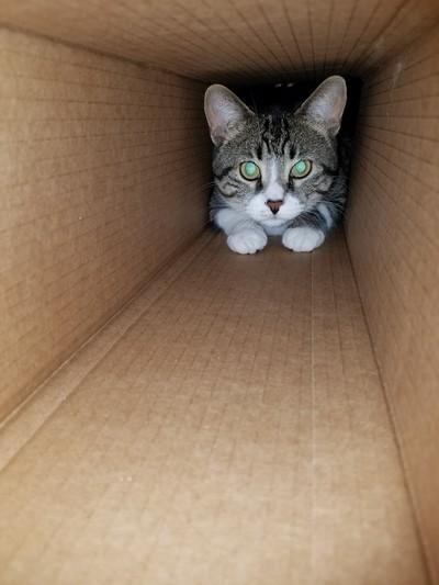 A box...many uses